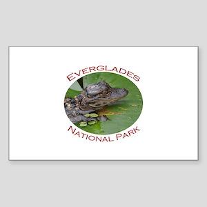 Everglades National Park...Baby Alligator Sticker