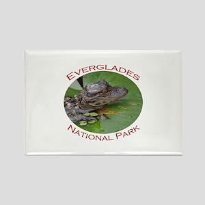 Everglades National Park...Baby Alligator Rectangl