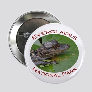 "Everglades National Park...Baby Alligator 2.25"" Bu"