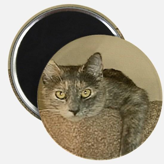 Princess Cat Magnet