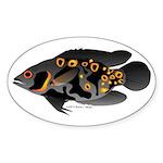 Oscar Ciclid Amazon River Sticker (Oval 10 pk)