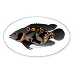 Oscar Ciclid Amazon River Sticker (Oval)