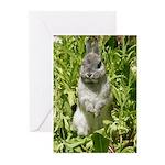 Cute Dwarf Bunny Rabbit Blank Cards (10 pack)