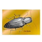 Click Beetle Postcards (Package of 8)