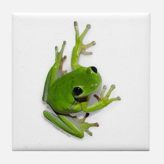 Tree Frog -  Tile Coaster