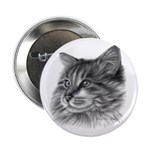 Maine Coon Cat 2.25