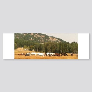 Beautiful Appaloosa Herd Sticker (Bumper)