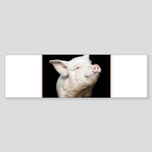 Cutest Pig Sticker (Bumper)