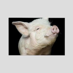 Cutest Pig Rectangle Magnet