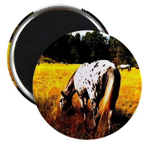 "Appaloosa horse 2.25"" Magnet (10 pack)"