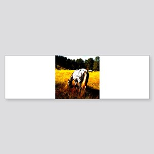 Appaloosa horse Sticker (Bumper)