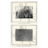 Fingerprint Framed Prints