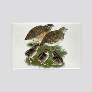 Coturnix Quail Family Rectangle Magnet