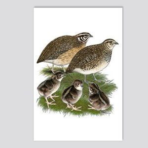 Coturnix Quail Family Postcards (Package of 8)
