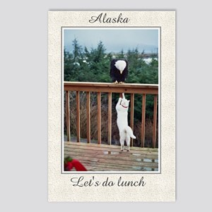 Eagle Cat 1 Postcards (Package of 8)