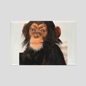 Monkey! Rectangle Magnet