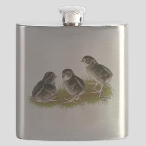 Coturnix Quail Chicks Flask