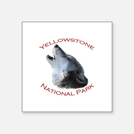 Yellowstone National Park...Wolf Howling Square St