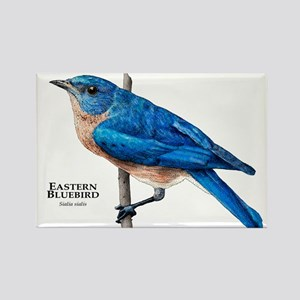 Eastern Bluebird Rectangle Magnet