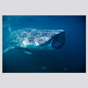 Whale shark and pilot fish