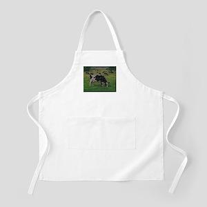 Holstein Milk Cow in Pasture Apron