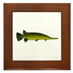 Longnosed Gar Framed Tile