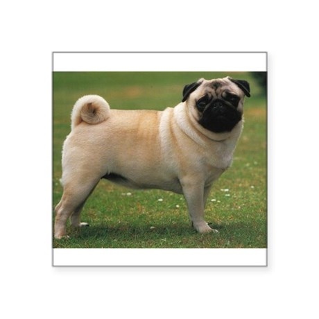 "your so pugly Square Sticker 3"" x 3"""