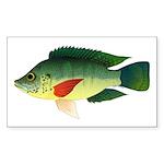 Mozambique tilapia Sticker (Rectangle 50 pk)