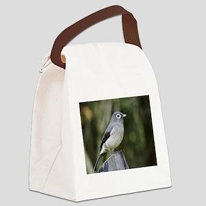 white eyed slaty flycatcher kenya collection Canva