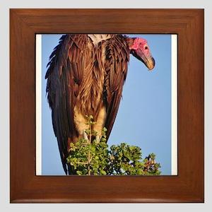 nubian vulture kenya collection Framed Tile