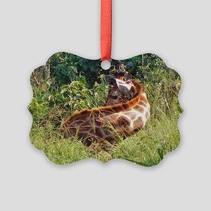 rothschild giraffe in grass kenya collection Pictu