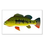 Royal Peacock Bass Sticker (Rectangle 50 pk)