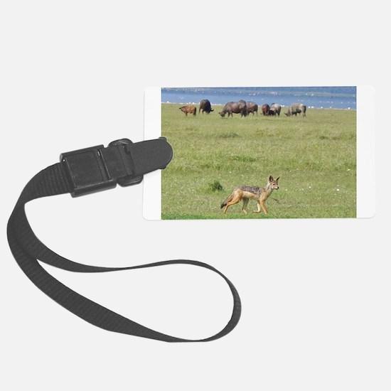 silverbacked jackal nakuru kenya collection Large