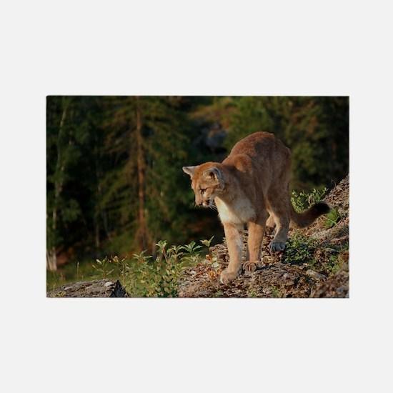 Cougar 1 Rectangle Magnet