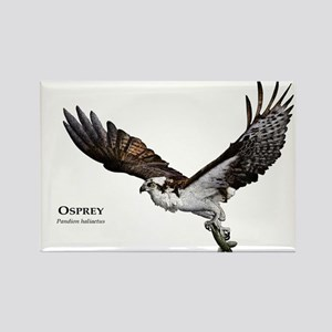 Osprey Rectangle Magnet