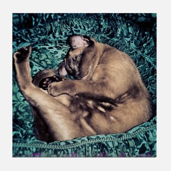 Burmese in Teal Cat Bed Tile Coaster