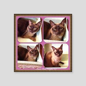 "Champagne Burmese Box Cat x4 Square Sticker 3"" x 3"