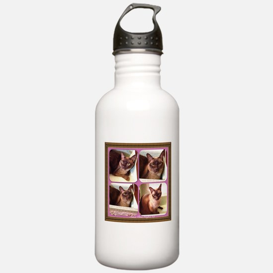 Champagne Burmese Box Cat x4 Sports Water Bottle