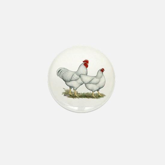 White Rock Chickens Mini Button