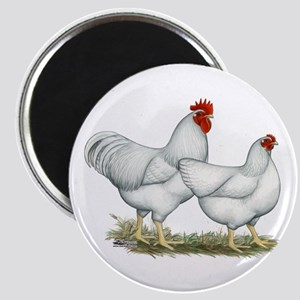 White Rock Chickens Magnet