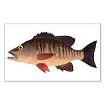Gray Mangrove Snapper v2 Sticker (Rectangle 50 pk)
