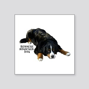 "Berner Rug Pose - Square Sticker 3"" x 3"""