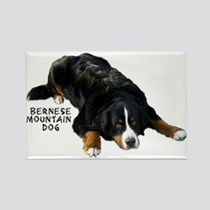 Berner Rug Pose - Rectangle Magnet