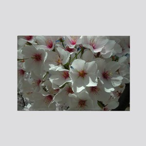 Cherry Blossoms 1 Rectangle Magnet