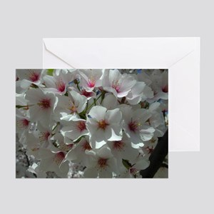 Cherry Blossoms 1 Greeting Cards (Pk of 10)