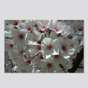 Cherry Blossoms 1 Postcards (Package of 8)