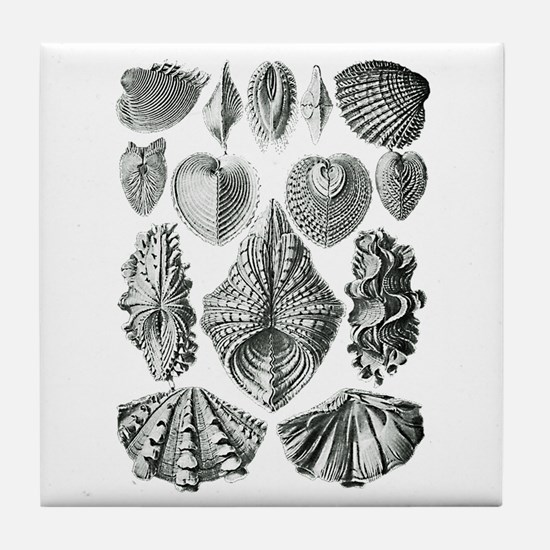 Shell Fossils Tile Coaster