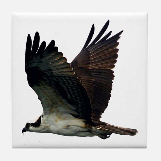 Osprey Tile Coaster
