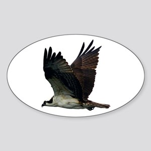 Osprey Sticker (Oval)