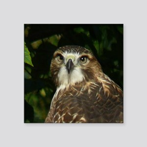 "Red-tailed Hawk Square Sticker 3"" x 3"""
